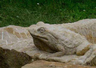 Sandsteinfrosch sitzt am Rand des Steintroges